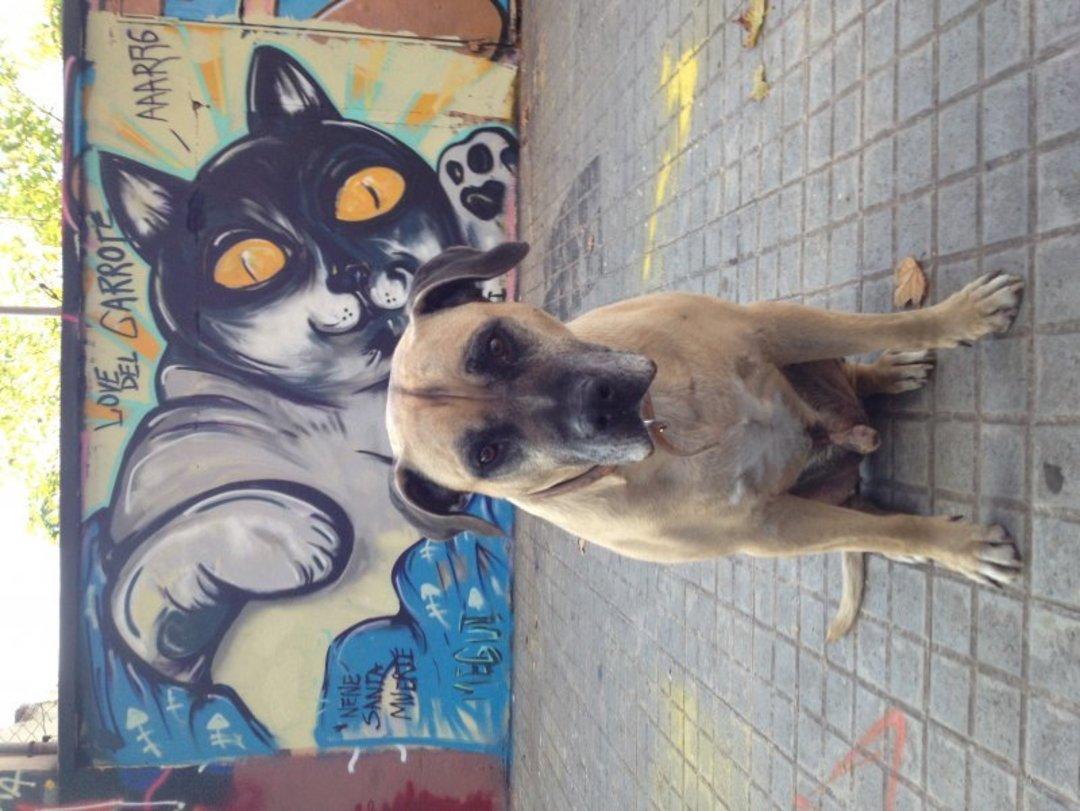 Wallspot - MEGUI - Agricultura - MEGUI - Barcelona - Agricultura - Graffity - Legal Walls - Il·lustració